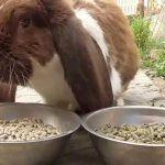 Кролик ест комбикорм