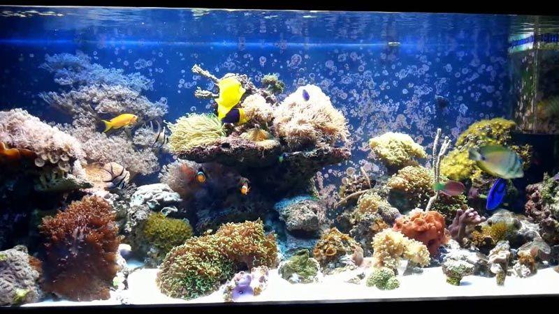 Морской аквариум после чистки
