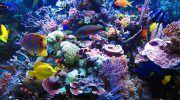 Морской аквариум: как создать в домашних условиях