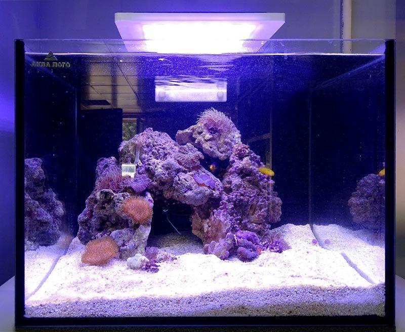 Пустой морской аквариум