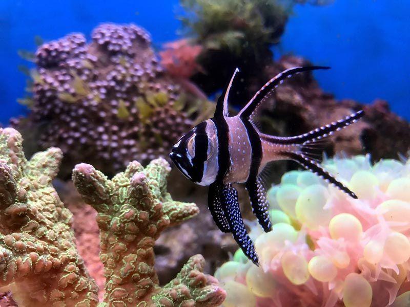 Рыбка в морском аквариуме