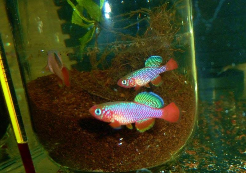 Рыбки в банке