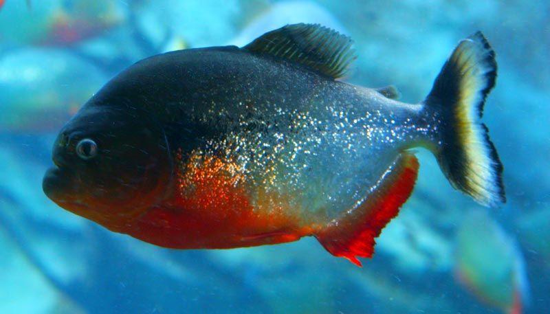 Рыба в голубой воде