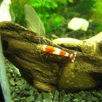 Красный кристалл в аквариуме