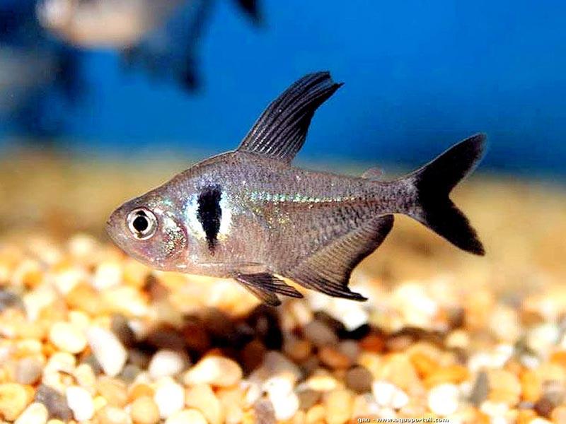 Рыбка у дна