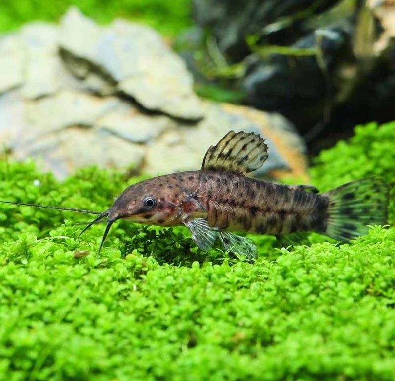 Лежит на зеленых водорослях