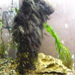 Куча вьетнамки в аквариуме