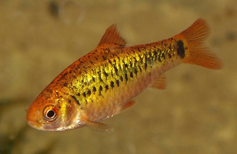 Рыбка в воде