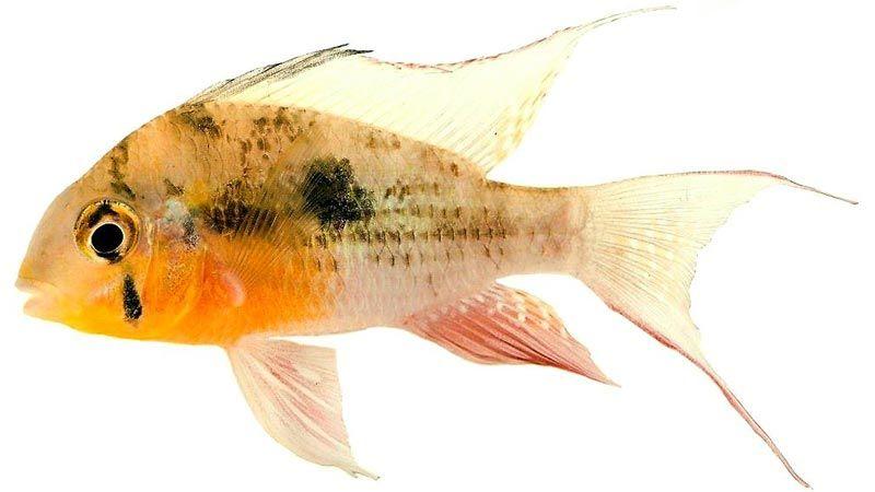 Рыбка вблизи