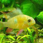 Рыбка возле зелени