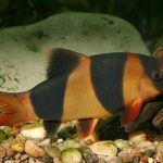 Оранжево-черная полоса