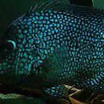 Голубенькая рыбка