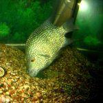 Рыбка ест со дна
