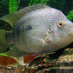 Серенькая рыбка