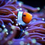 Высовывается из рифа