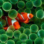 Плавают вдвоем