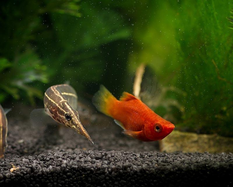 Угорь и рыбка