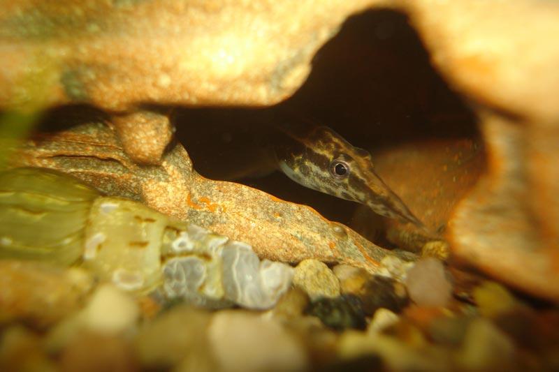 Макрогнату в пещерке