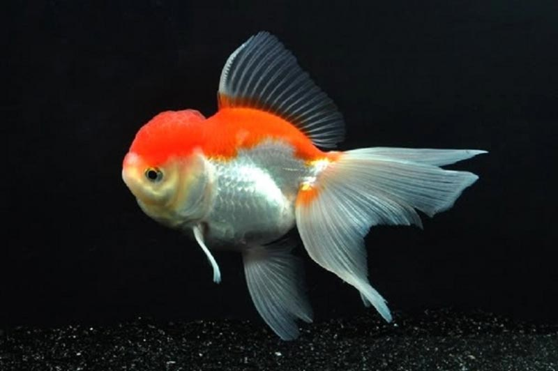 Красно-белая