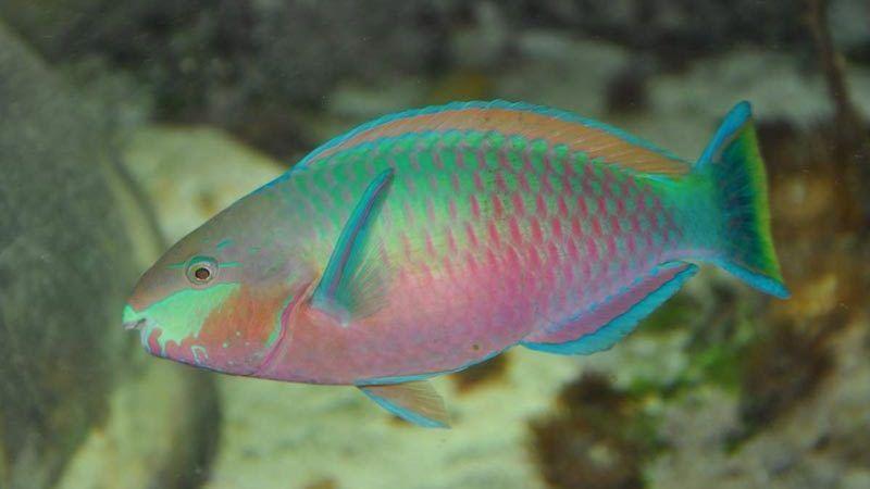 Красивая окраска у рыбки