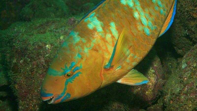 Блестящая чешуя у рыбки