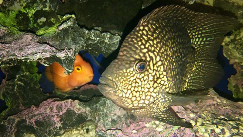 Рыбы-Попугай в пещерке