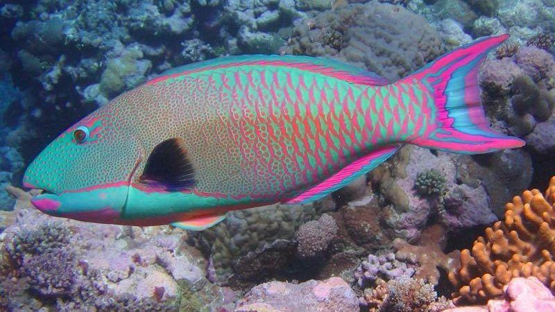 Яркая разноцветная рыбка