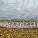 Длинное тело у Змееголова