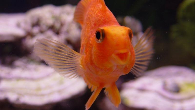 """Рыбка """"улыбается"""""""