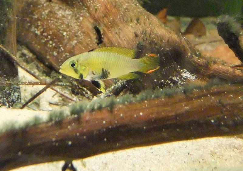Рыбка у коряги
