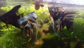 Корм для рыб Циклоп: виды, как давать, хранение