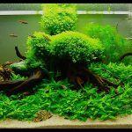 Зеленый аквариум