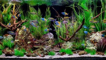 Декорации для аквариума: 21 идея своими руками