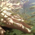 Гамбузия в воде