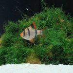Рыбка на фоне мха