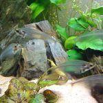 Стайка прозрачных рыб