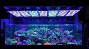 Светодиоды для аквариума: ленты, лампы, выбор