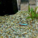 Мелкая галька в аквариуме