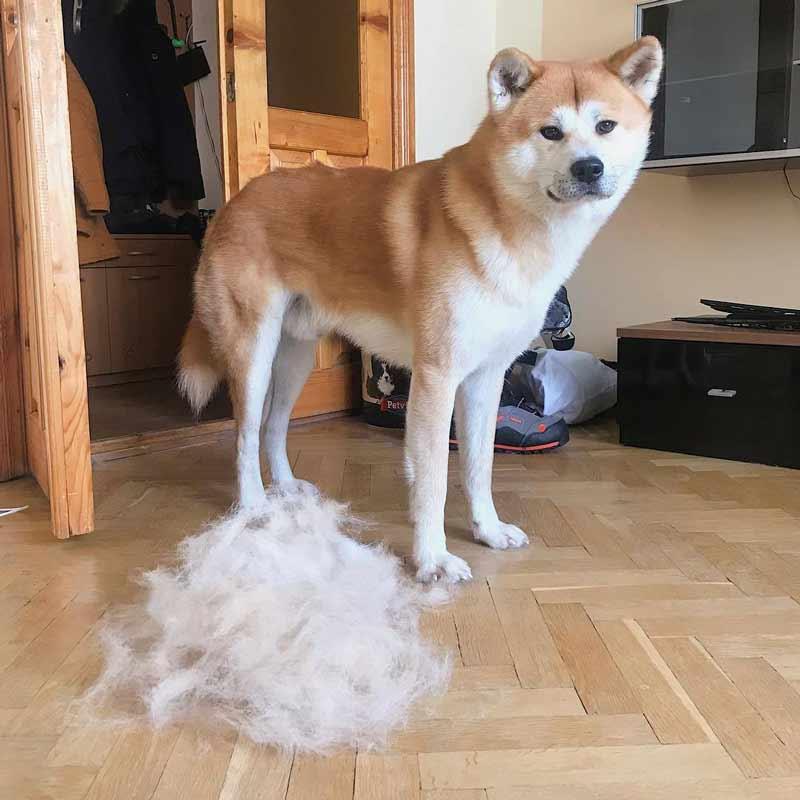 Шерсть от собаки