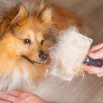 Длинношерстную собаку вычесывают