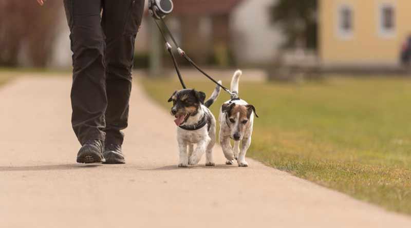 Поводок для двух и более собак