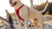Шлейка для собак: все виды, для крупных, мелких и средних пород