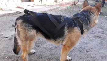 Шлейка для собак своими руками