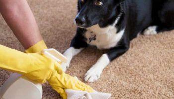 Как отучить взрослую собаку и щенка писать и гадить дома