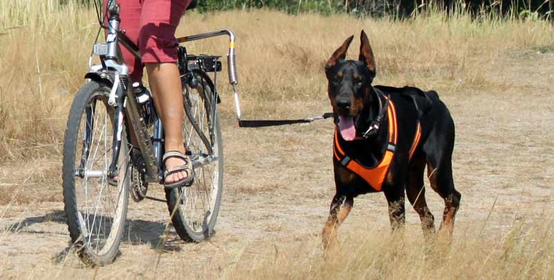 Поводок для велосипеда