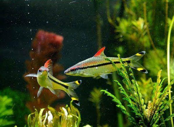 Две рыбы общаются