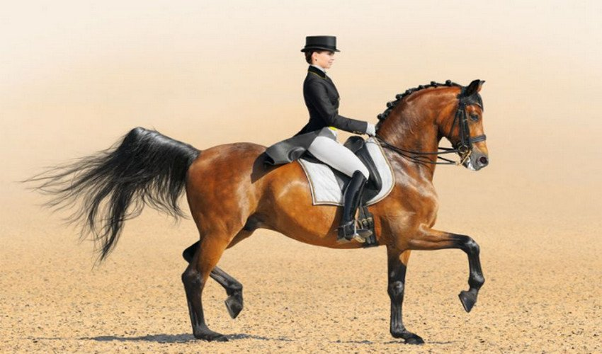 Лошадиный аллюр
