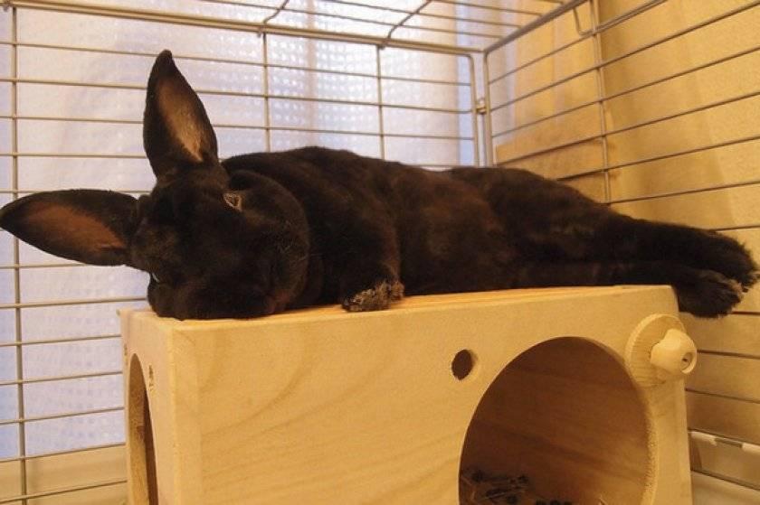 Почему кролик копает дно клетки - oozoo.ru