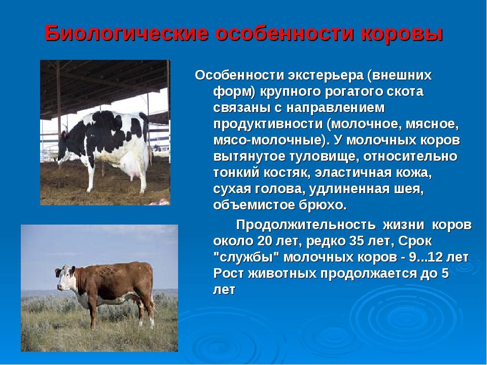 Мясо-молочные породы коров, характеристика крс молочного направления, мясное скотоводство