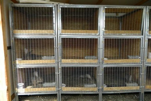 Какой пол лучше для кроликов: виды и особенности конструкций